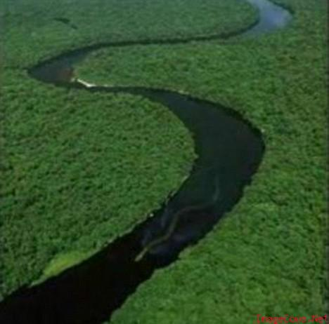 naga sungai kapuas